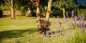 Agriturismo-San-Jacopo_giardino_01
